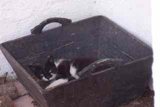 Felicity in the logbox