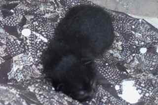 Felicity's kitten