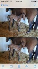 Photo#14-Foal