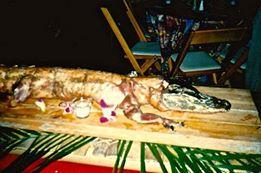 Photo#3-Alligator