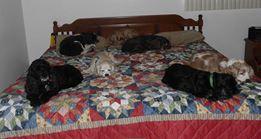 Photo#4-7DogsSleeping