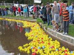Photo#5-Ducks