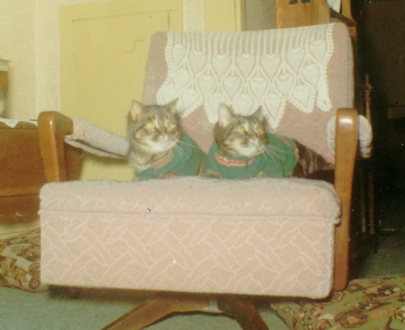 Photo#7-Cats