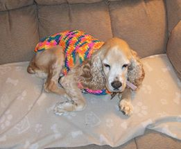 Photo#8-DogNSweater