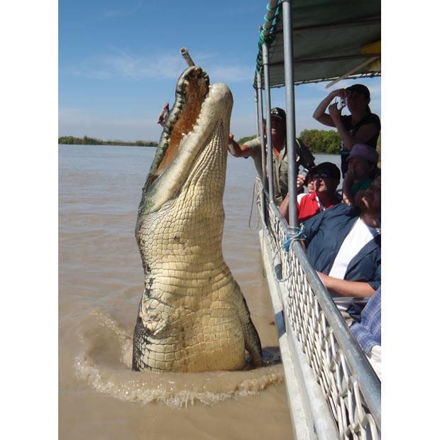 Photo#5-Croc
