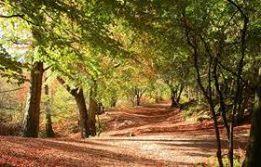 Photo#11-Woods