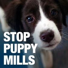 Photo#16-StopPuppyMills