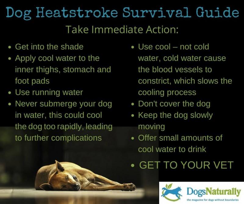 Photo#24-DogHeatstroke
