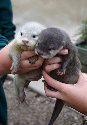 Photo#30-OtterSibs