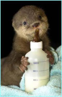 Photo#31-OtterBabyBottle