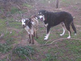 Photo#5-Katy&Monty