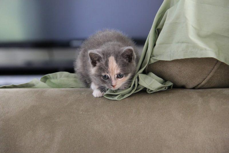 Photo#8-Kitten