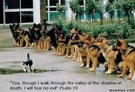 Photo#9-ShadowOfDeath